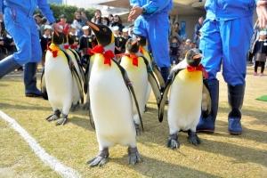 real penguins