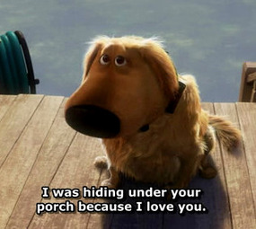 hiding under your porch dug