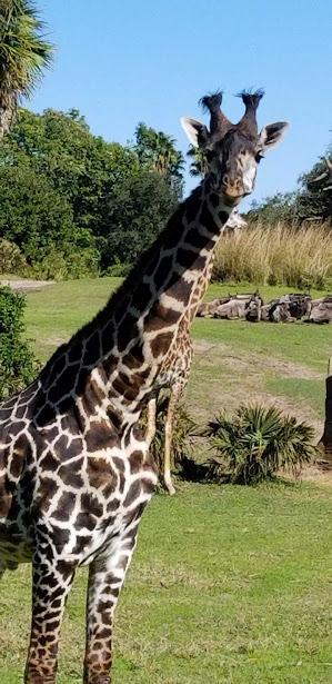 safari 5 day 12 2018