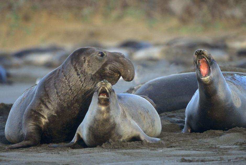 ELEPHANT SEALS CA TRIP DAY 7 PRE TRIP.jpg