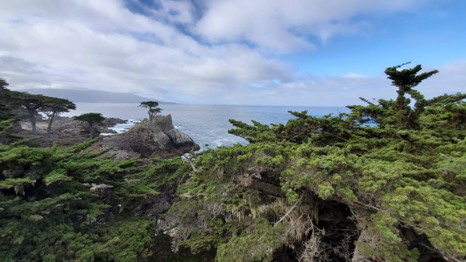 LONE CYPRESS 1 DAY 7 CA 2019.jpg