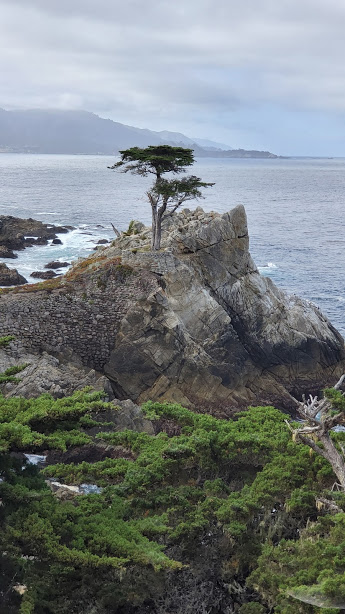 LONE CYPRESS 2 DAY 7 CA 2019.jpg