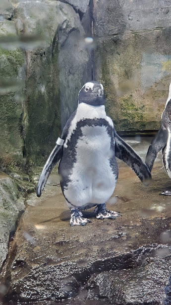 PENGUIN 1 DAY 7 CA 2019.jpg