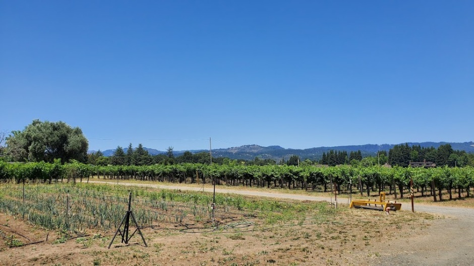 TAPLIN VINES DAY 4 CA 2019
