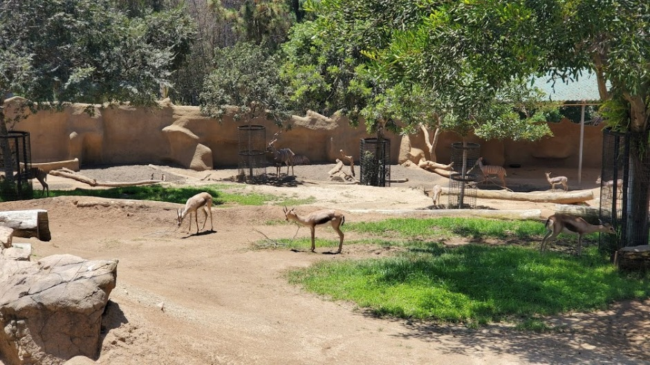 SD ZOO 11 DAY 16 CA 2019.jpg