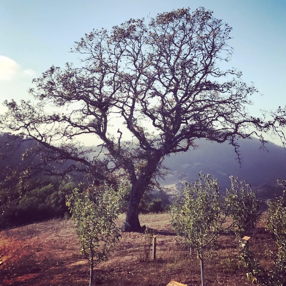 TREE NAPA TRIP 2019 DAY 2.jpeg